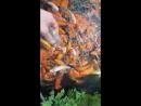 Годуєм золоту рибку