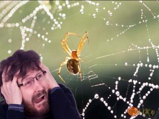 Так и не смог избавится от Арахнофобии боязни пауков.Выставочный зал.Серпухов 2010г