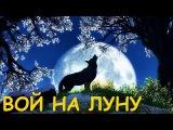 Сектор Газа - Вой на Луну (клип)