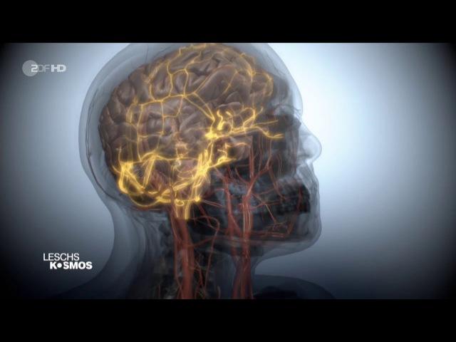 Leschs Kosmos - Burnout: Hysterie oder Epidemie? [HD]