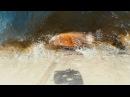 Водяная крыса на набережной Саратова