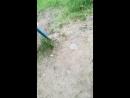 шикарный вадик