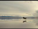 Собака на фоне великолепного озера