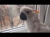 Какаду узнал, что в мире есть другие птицы