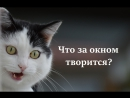 """Говорящая кошка - монолог  """"Что за окном творится?"""""""