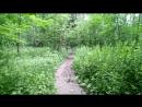 Тропинка в Гурьяновском лесу 3