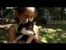 Введение в собаковедение 101 Dogs Выбор щенка Часть 18