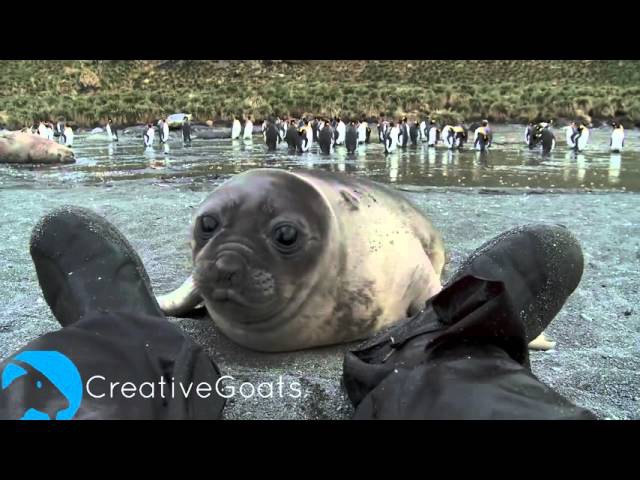 Man Brutally Attacked By Baby Seal (CUTE)