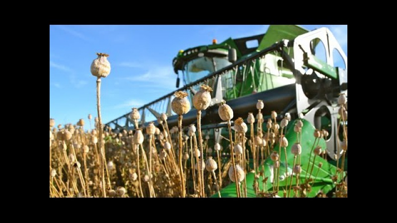 Poppy Seed - Seeding to Harvest | John Deere 7280R - S680i - Lemken | Blauwmaanzaad oogst Thes Agro