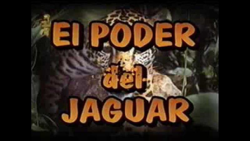 Искусство сновидения Сила ягуара