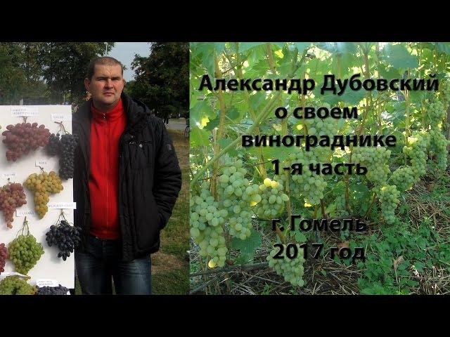 Лекция А. Дубовского (Гомель) о своем винограднике - 1 часть