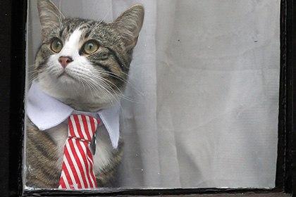 Определены самые известные вСМИ коты года