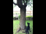 Ну вот собака, например, понятно, охотится, а белке-то чего надо )