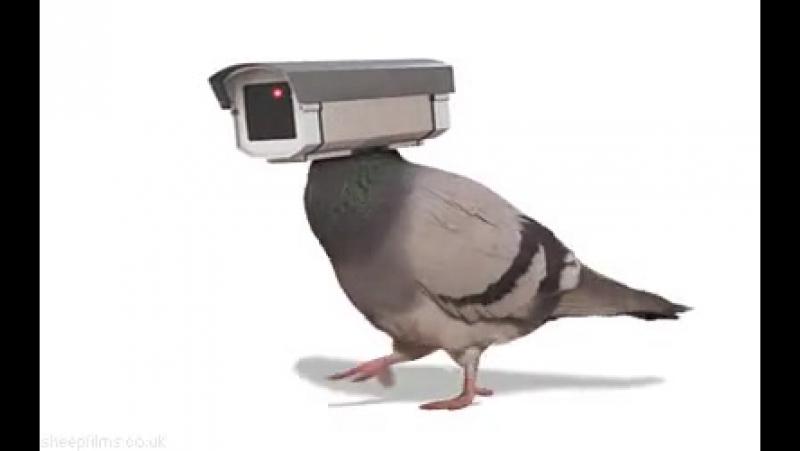 птица слидит за нами