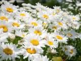 Самый красивый вальс В А Моцарт Вальс цветов