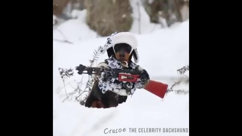 Не собака, а зверь! ))