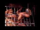 Коптильня с гидрозатвором для горячего копчения мяса курицы, рыбы, свинины или сала