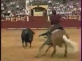 Corrida Warhorse vs Bull #coub, #коуб