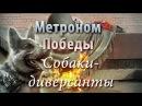 Метроном Победы - Собаки-диверсанты