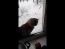 У кота 9 жизней. Не повторять в реальности!