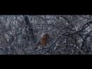 Waitrose Christmas TV ad 2016 - #HomeForChristmas