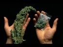 21 BBC . В чем вред марихуаны. Cannabis - What's the Harm.
