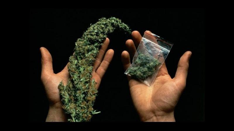 21 В чем вред марихуаны. Cannabis - What's the Harm.