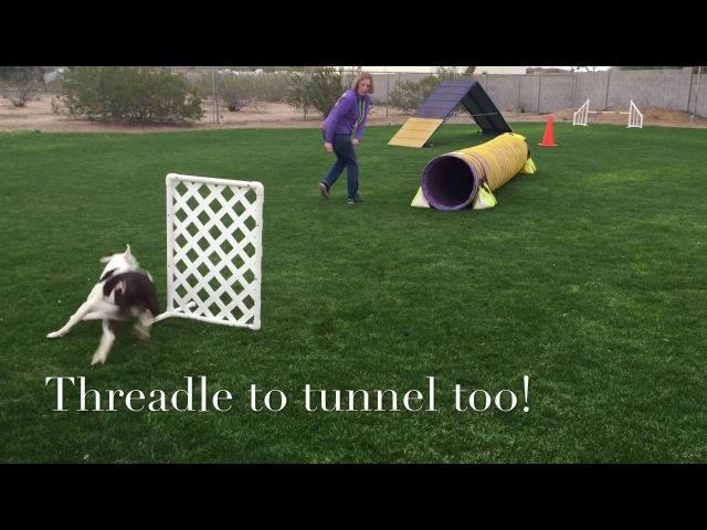 Threadle Cue Exercises