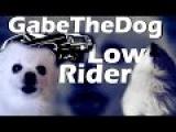 Gabe The Dog War - Low Rider (Lookas) Hargris Remix