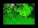 HAC 2012 - HUNGARIAN AQUASCAPING CONTEST - MOST BEAUTIFUL AQUARIUM FISH TANK