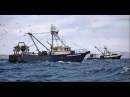 Alaska Pollock Fishing full documentary DOCFILMS