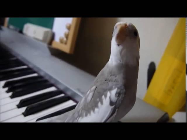 Птичка замечательно поет