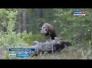 В Колыванском районе семейство медведей держит в страхе деревню