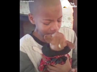 Boy Has BEST Reaction to Dog Adoption