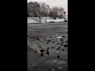 верхнее озеро. птицы.