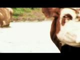 The Вйо Кобеляки скачать песню бесплатно в mp3 качестве и слушать онлайн