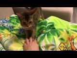 Видео на конкурс Кошка Абби