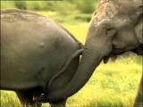 эротика видео! дикие животные сумасшедший секс прикольная озвучка