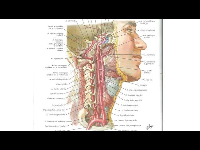 Елена Шведова Избавиться от болей в плече-лопаточной зоне