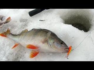 Рыбалка. Ловля крупного окуня на Южной Ладоге.