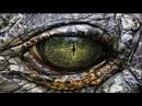 Странное дело Планета динозавров Хроника ликвидации