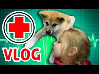 VLOG: Щенок Киба попал к врачу. Покупаем Кибе вкусняшки и мне игрушки сюрприз. Puppy went to doctor