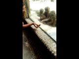 Зоопарк. Обезьяны за стеклом)