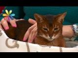 Вы и не подозревали, чего на самом деле боятся ваши кошки! – Все буде добре. Выпус...