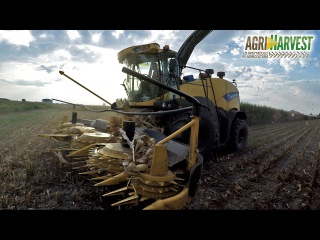 New Holland FR850 Yellow Bull | Iveco Scania trucks on field | Mais silage 2016 | 4K