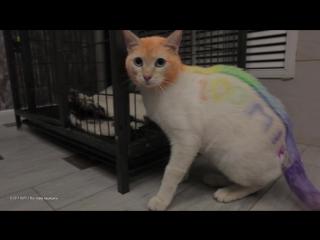 В Тюмени кота выкрасили в цвета радуги в надежде найти ему хозяев