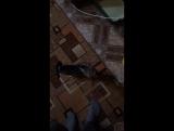 Как я кормлю свою кошку )