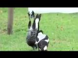)) Чтобы отличаться от всех, не обязательно быть белой вороной... Просто веселой дурочкой.... )) )) ))