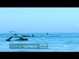 Тайны Чапман 14 августа на РЕН ТВ