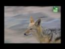 BBC Заповедник в дебрях Африки 06 серия Реальное ТВ животные 2005